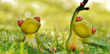 frogs-1109791_960_720